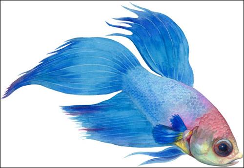 Картинки или рисунки рыбки