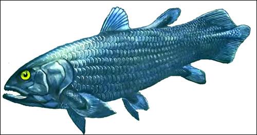 Подкласс лопастеперые рыбы (Sarcopterygii)