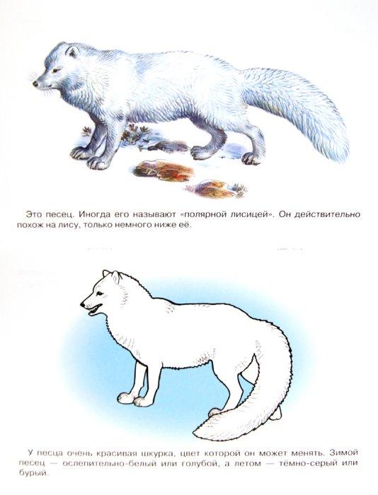 Раскраска животные арктики и антарктики